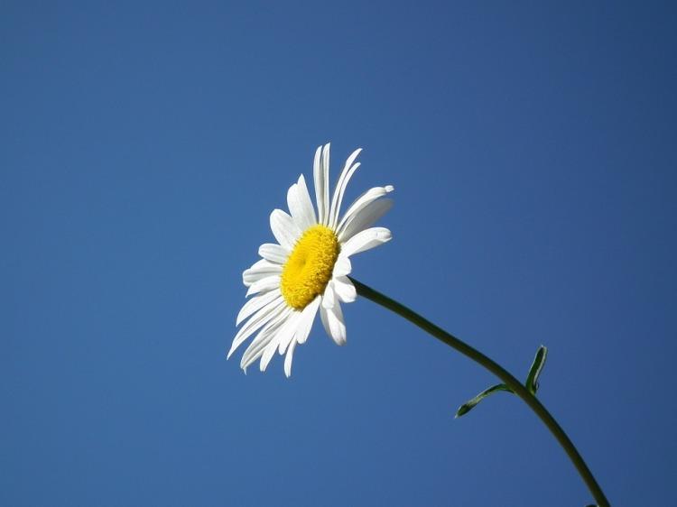 flower-193452_960_720